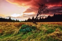 Lonely tree at Filipova Hut
