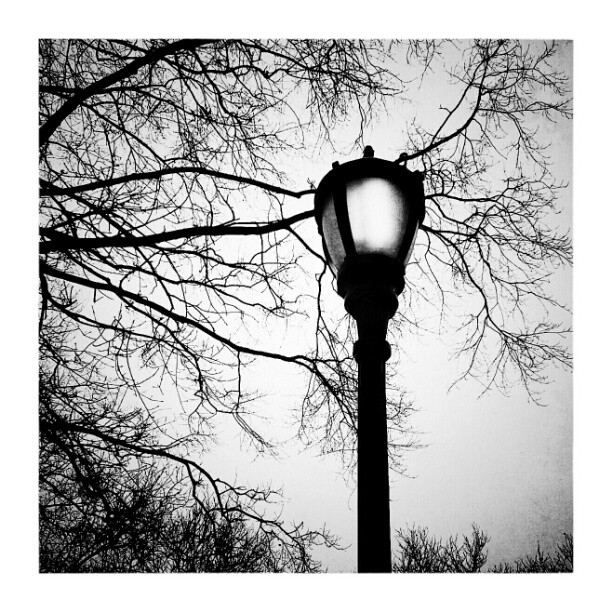 Branches and lantern - from Instagram