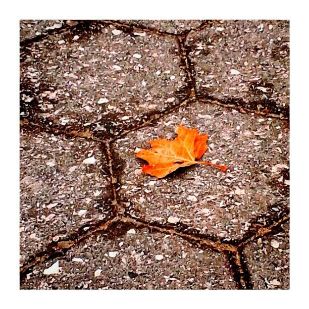 Autumn whisper - from Instagram