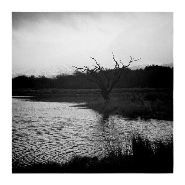 Lonely Tree (Loch Awe) – from Instagram