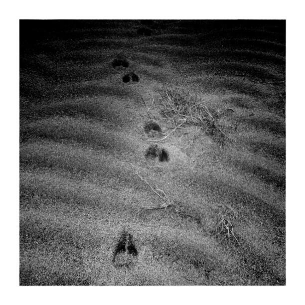 Deer hooves (b&w version) - from Instagram