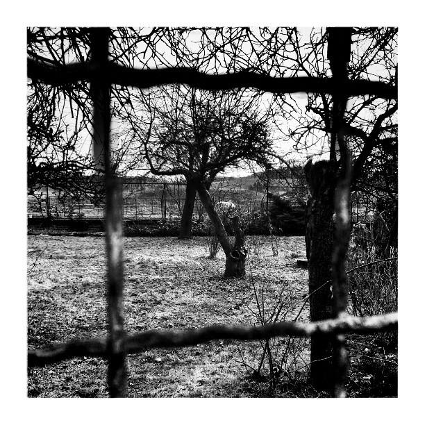 Forbidden garden - from Instagram