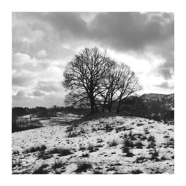 Lonely Tree near Crag Head (b&w edit) - from Instagram