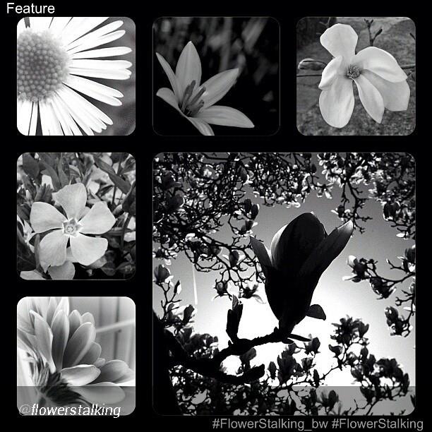 My photo Propeller featured by @flowerstalking