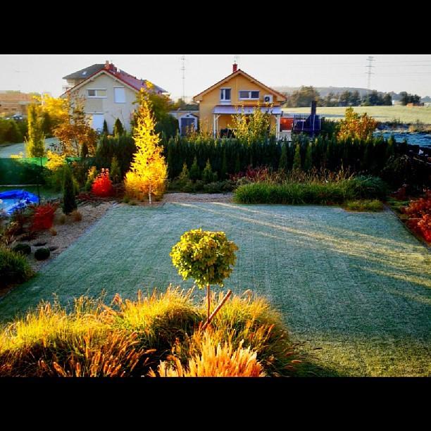 Love my garden – from Instagram