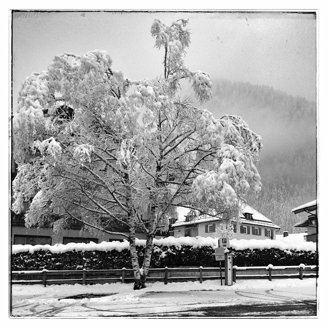 The beauty of snow - from Instagram
