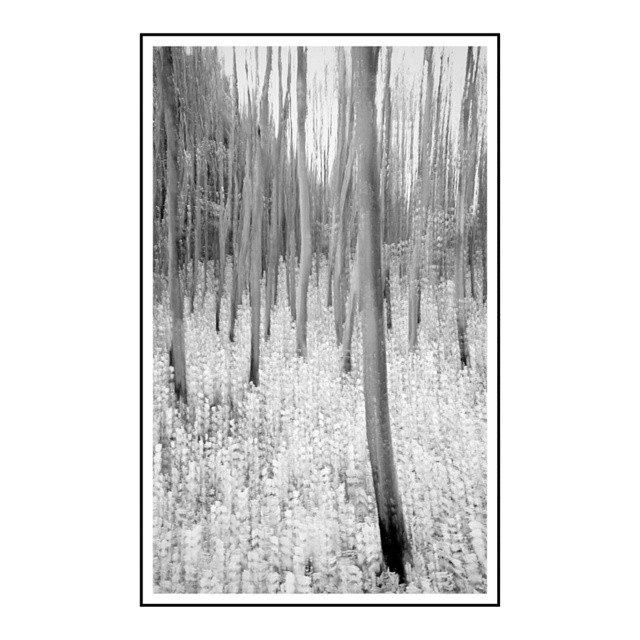 Oak wood in movement